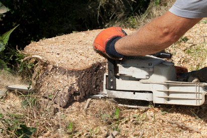 stump grinding and removal service