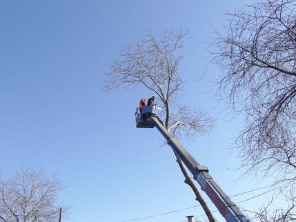Tree trimming service framingham